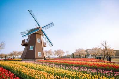 Die Seven River Journey SPRING EDITION - Frühling in Europa